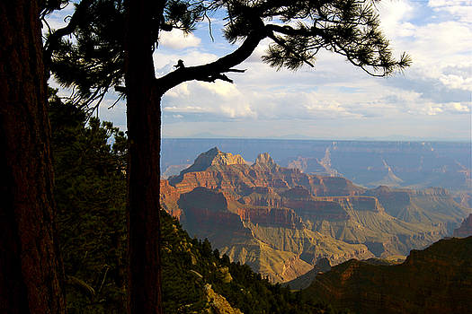 Bird's Eye View of the Grand Canyon by Bianca Collins