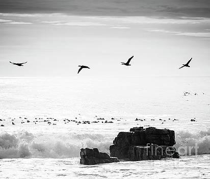 Tim Hester - Birds Flying Over Ocean Black and White