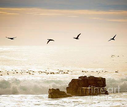 Tim Hester - Birds Flying Over Ocean