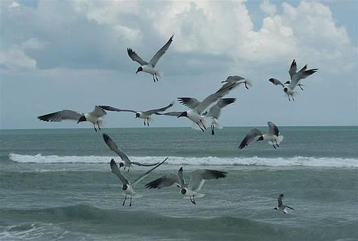 Birds in flight by Barb Montanye Meseroll