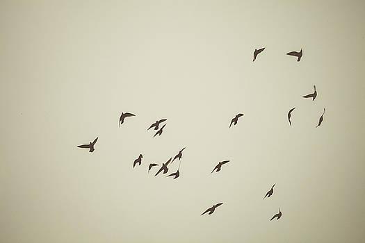 Birds In Flight by Debi Bishop