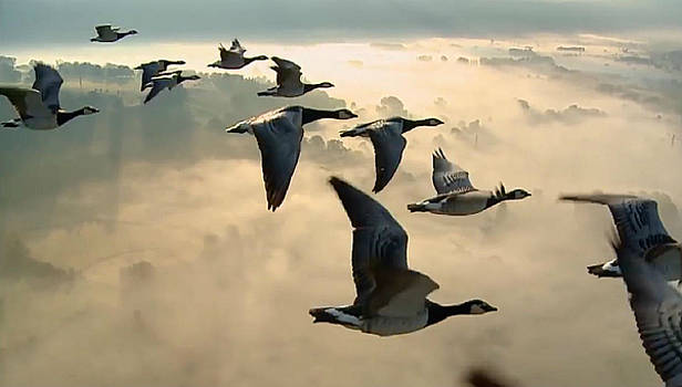 Birds in Flight by Digital Art Cafe