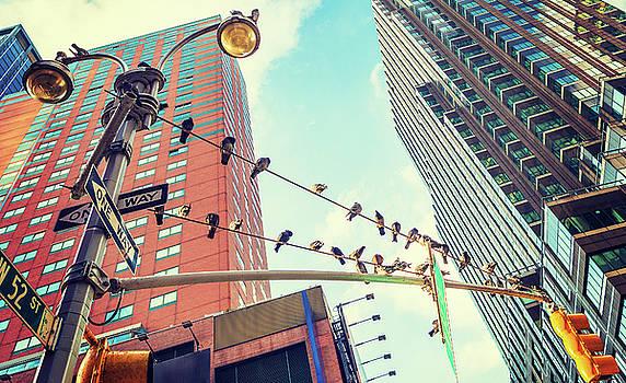 Alexander Image - Birds in New York City