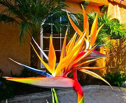 Gwyn Newcombe - Birds IN paradise