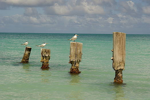 Birds in Paradise by Lynn Vidler