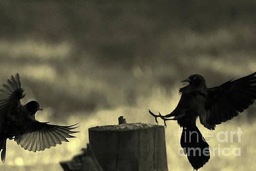 Dan Friend - Birds in silhouette flying to log