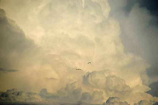 Birds in the Clouds by Vallee Johnson