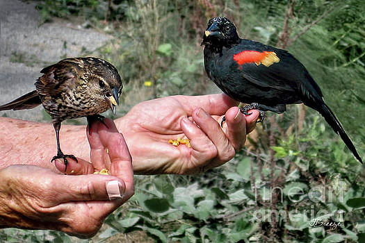 Birds in the Hands by Jennie Breeze