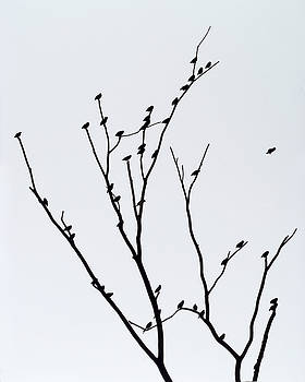 Birds in Tree by John Gilroy