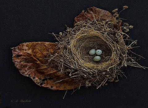 Birds Nest #1 by Carolyn Marchetti