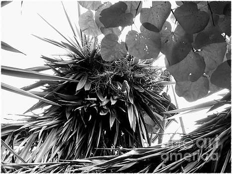 Birds Nest by Anna Sancho Biesa