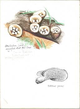 Michael Earney - Birds Nest Mushroom