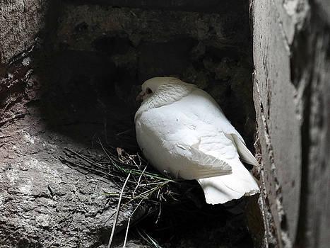 Lexa Harpell - Birds nesting in Castle Turret