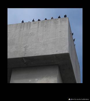 Birds by Nicolas Lockheimers