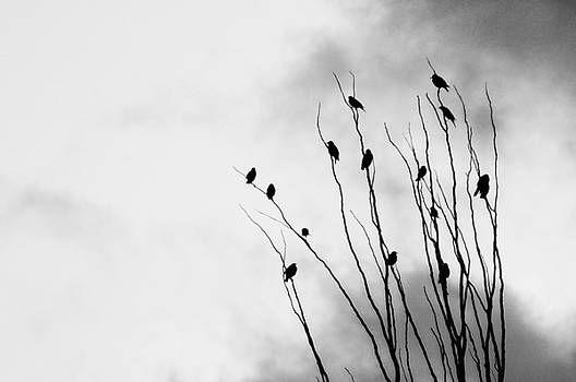 Birds of a feather by Shawn Wood
