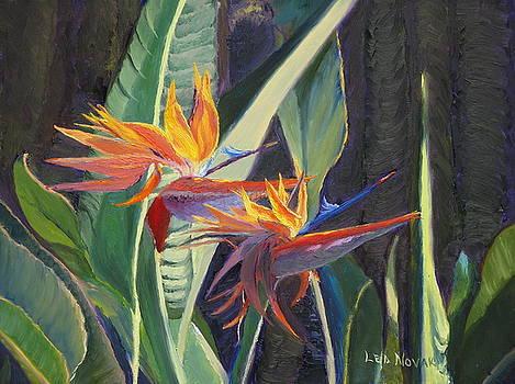 Lea Novak - Birds of Paradise