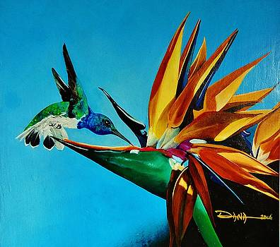 Birds of Paradise with White necked Jacobin hummingbird by Dana Newman