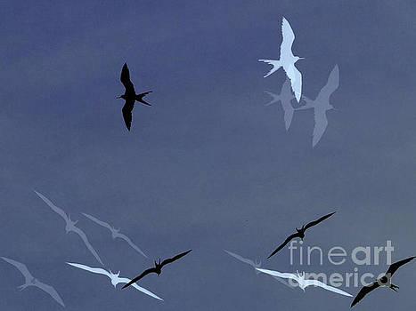 Birds Of Pedasi, In The Dry Arc Of Panama by Al Bourassa