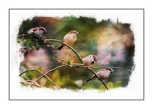 Birds on a Branch by Scott Fracasso
