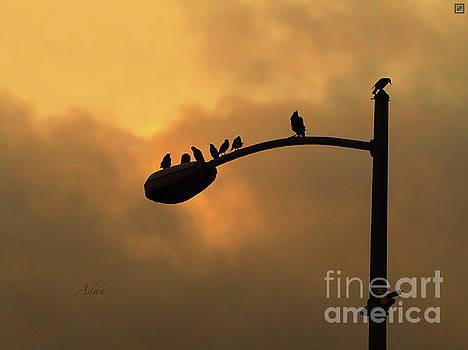 Felipe Adan Lerma - Birds on a Post Amber Light Detail