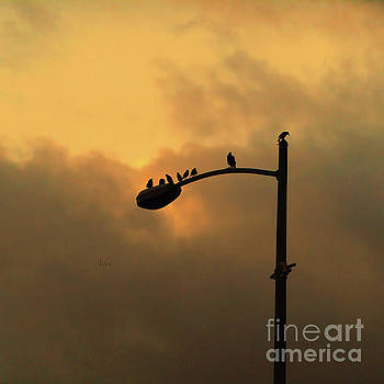 Felipe Adan Lerma - Birds on a Post Amber Light Square