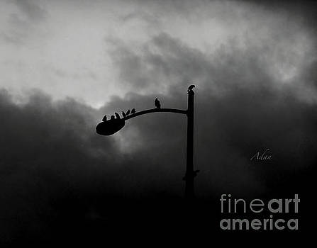 Felipe Adan Lerma - Birds on a Post BW