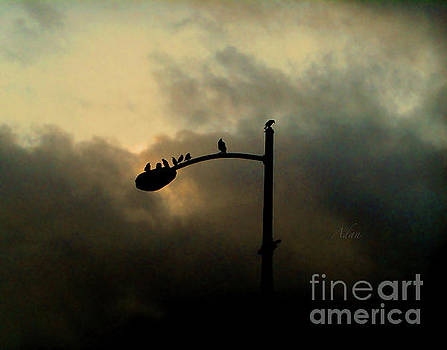 Felipe Adan Lerma - Birds on a Post Changing Sky