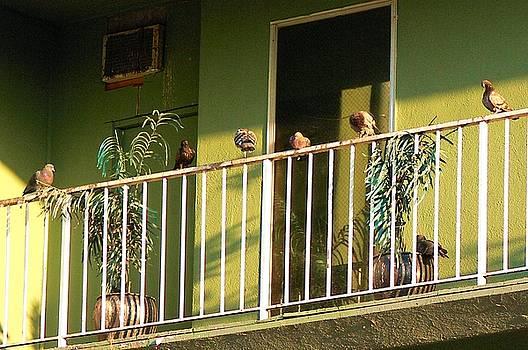Birds On A Railing by Bill Buth
