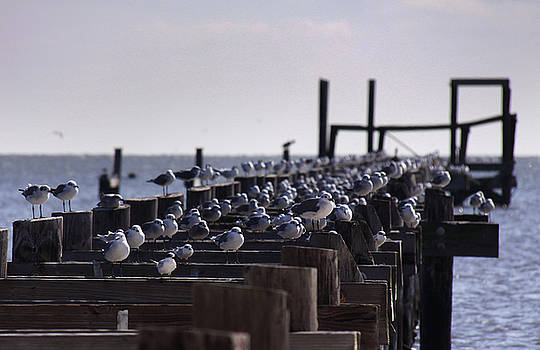 Birds on a Washed Out Pier by Jason Rossi