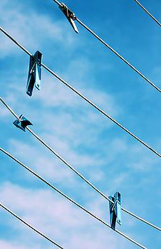 Birds on a WIre by Daniel Solone