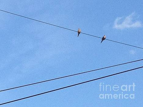 Birds on a Wire by Iris Newman