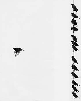 Birds on a wire by Jim Wright