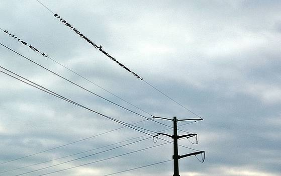 Birds On A Wire by Stephanie Calhoun