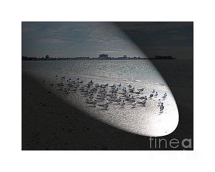 Birds on Beach by Karen Francis