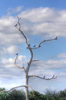 Birds on Limbs by John Rowe