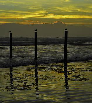 Birds on pilings by Julianne Felton