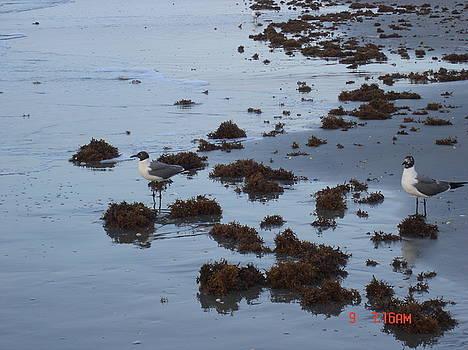 Birds on the Beach by Martha Roehrick