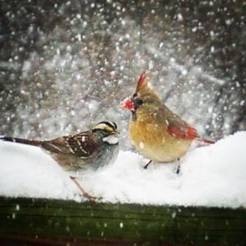 #birds #wildlife #wild by Sharon Halteman