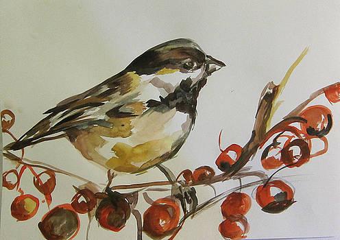 Birdy by Colette Wirz