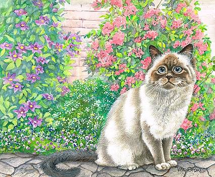 Birman Beauty-sealpoint by Val Stokes