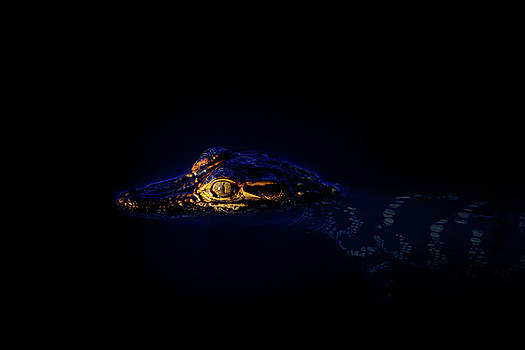 Birth of a Predator by Mark Andrew Thomas