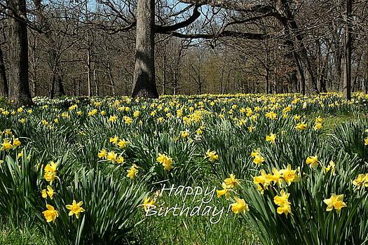 Birthday Daffodils by Rosanne Jordan