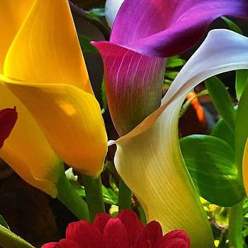 Birthday Flowers by Anne Thurston