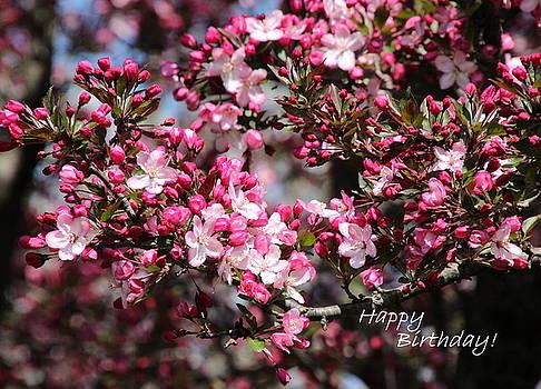 Birthday Flowers by Rosanne Jordan