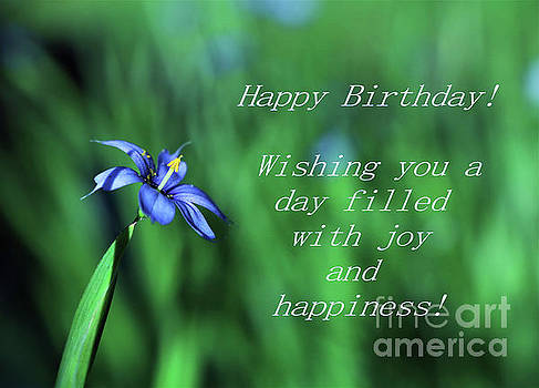 Birthday Wish - Blue Eyed Grass Flower by Dee Winslow