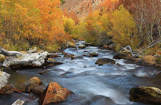 Bishop Creek Fall Season by Dung Ma