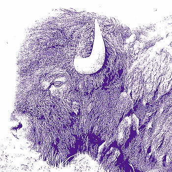 Bison 1 by Debby Richards