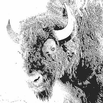 Bison 2 by Debby Richards