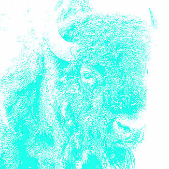 Bison 3 by Debby Richards