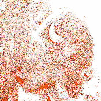 Bison 4 by Debby Richards